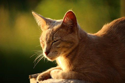 Cat, Mieze, Kitten, Tiger Cat, Mackerel, Breed Cat