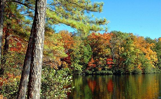Fall Colors, Autumn, Vibrant, Colorful, North Georgia