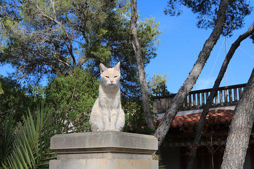 Mallorca, Cat, Domestic Cat, Animal World, South, Pet