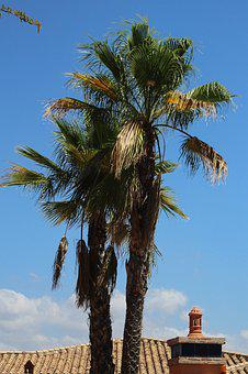 Palm Tree, Spain, Tree, Palm, Vacation, Summer, Travel