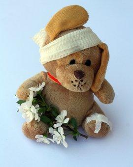 Teddy, Dog, Stuffed Animal, Ill, Injured, Fever, Leg