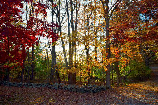 Fall, Foliage, Color, Rock Wall, Trees, Autumn, Yellow