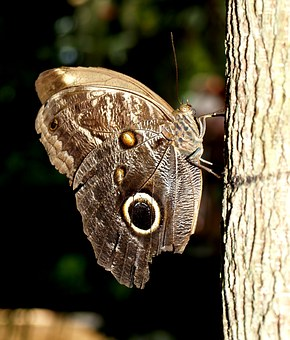 Drexel, Nature, Animal, Butterfly