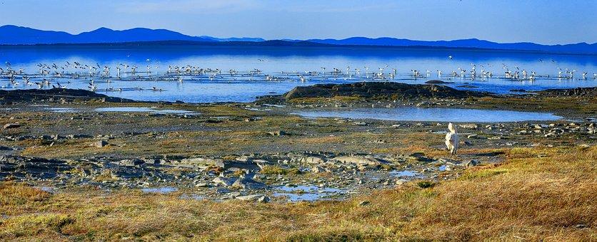Geese, Birds, Animals, River, Rocks, Horizon, Landscape