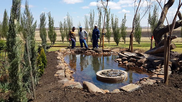 Fishpond, Pond, Fish Pond, Pool, Biotope, Artificial