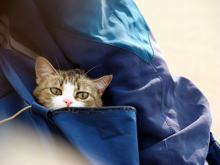 Cat, Bag, Eyes, Cute, Pet, Domestic, Feline, Bengal