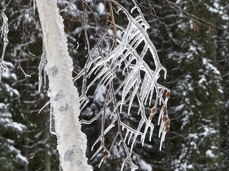 Icicles, Cold, Icy, Winter, Branch, Tree, Close-up
