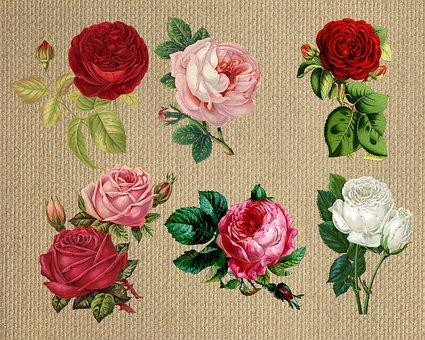 Flower, Rose, Burlap, Collection, Vintage, Composition