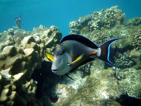 Egypt, Diving, Marsa Alam, Underwater, Sea, Sea Animal