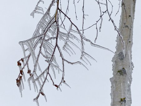 Icicle, Cold, Icy, Winter, Branch, Tree, Close-up