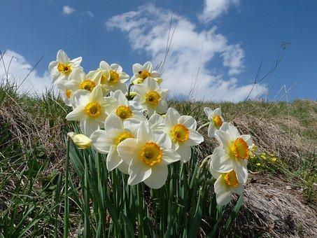 Flowers, Spring, Margone, Bloomed, Prato