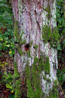 Tree, Old, Lichens, Moss, Trunk, The Bark, Forest