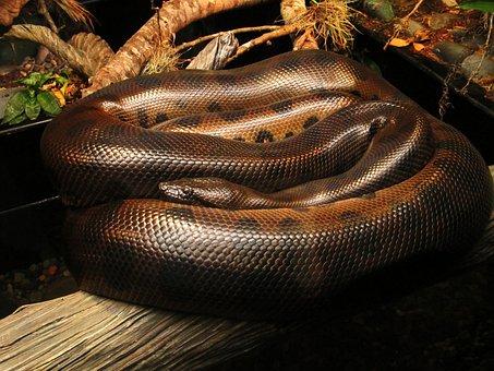 Snake, Animal, Reptile, Wild, Wildlife, Zoo, Houston