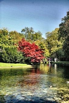 Munich, English Park, Tree, Park, Bavaria
