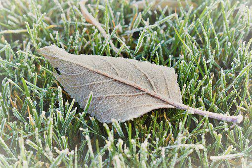 Frost, Mature, Cold Sheet, Frozen, Nature, Leaves