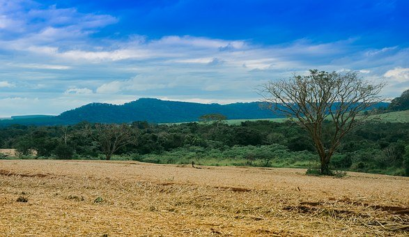 Landscape, Green, Clouds, Serrated, Brazil, Rural, Tree