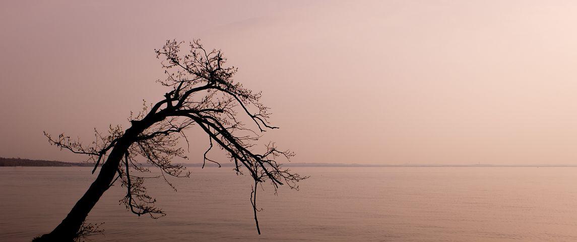 Lazise, Lake, Tree, Sunset, Shadow, Silhouette