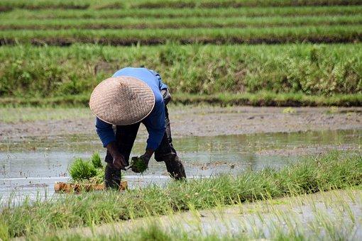 Bali, Indonesia, Travel, Rice Fields, Panorama
