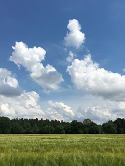 Nature, Fresh, Landscape, Field, Green, Blue, Sky