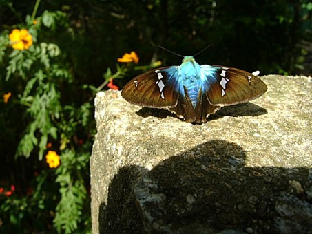 Butterfly, Blue, Insect, Flower, Yellow, Stone, Nature