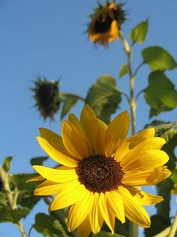 Beautiful, Blue, Colorful, Flora, Flower, Flowers