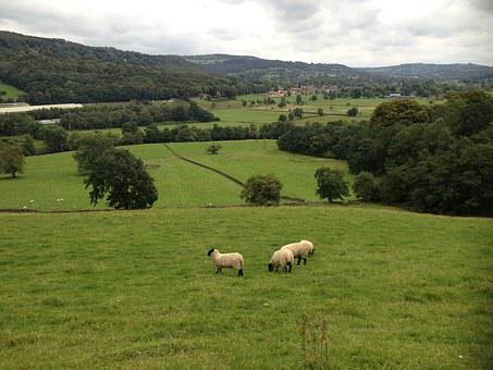 Landscape, Sheep, Sky, Horizon, Nature, Heaven, Animal