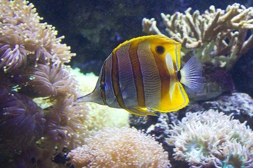 Fish, Stripy, Water, Aqua, Marine, Underwater, Sea