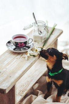 Puppy, Pet, Dog, Sweet, Cute, Animal, Flower, Tea