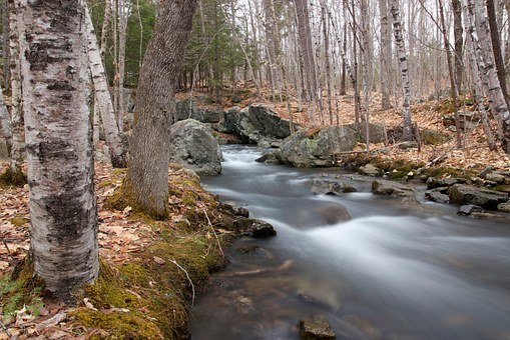 Water, Creek, River, Stream, Flow, Motion, Wild, White