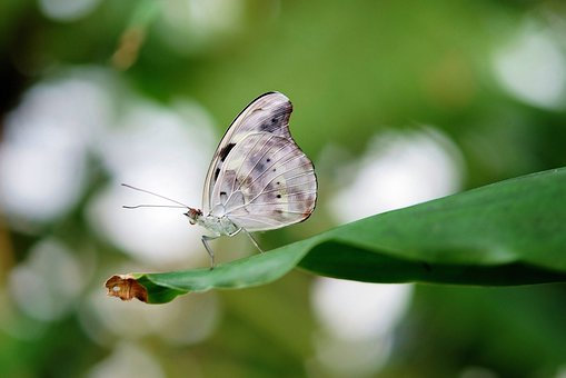 Blue, White Butterfly, Butterflies, Colorful, Insect