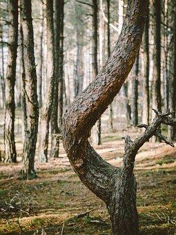 Forest, Trunk, Shape, Winding, Woods, Tree, Bark