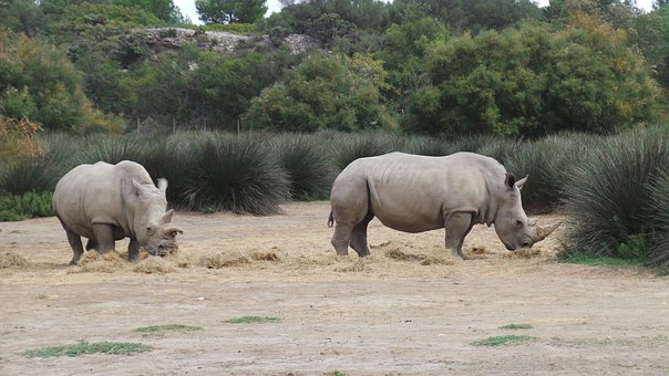 Rhinoceros, African Reserve, Sigean, Zoo