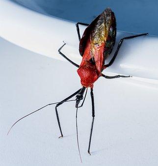 Beetle, Insect, Arachnid, Exotic, Close, Black