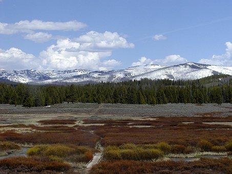 Yellowstone National Park, Wyoming, Usa, Meadow, Dry