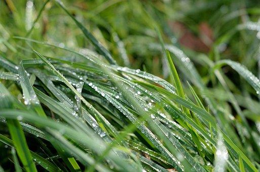 Grass, Green, Dew, Wassertrofpen, Nature, Drip, Macro