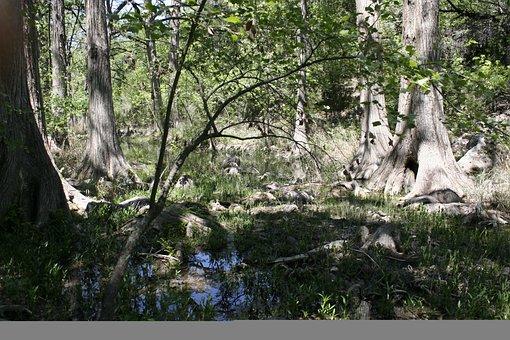 Swamp, Marsh, Trees, Trunk, Forest, Wet Lands, Nature