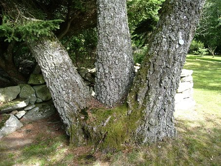 Alphem, Aboretum, Floby, Sweden, Tree, Tribes, Green