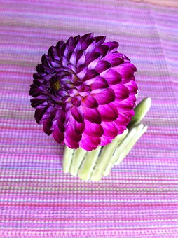 Ball Dahlias, Dahlia, Flower, Nature, Purple, Autumn