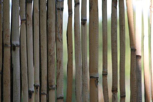 Bamboo, Yellow Bamboo, Halme, Fence, Bamboo Greenhouse