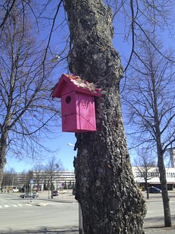 Bird, Bowl, Tree, Market, Finnish, Branches