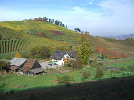 Vineyard, Autumn, Eunice Hof, Bottenau