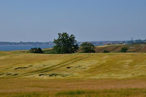 Field, Golden, Wheat Coast, Summer Sun, Blue Sky