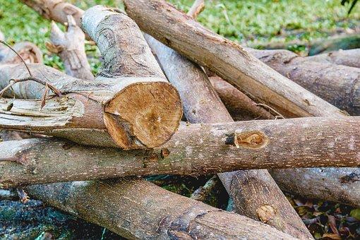 Cut The Wood, A Pile Of Wood, Firewood