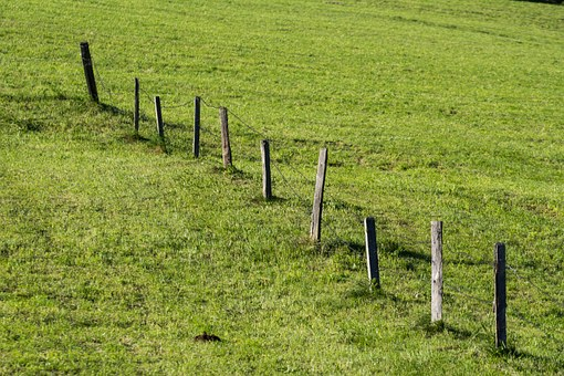 Meadow, Fence, Nature, Wood Fence, Pasture, Idyll