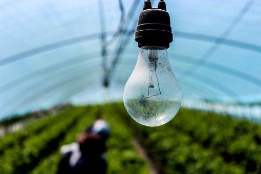 Light Bulb, Incandescent, Electric, Lighting