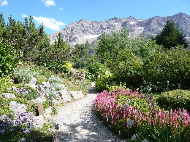 Hautes Alpes, Garden, Lautaret