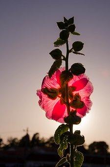 Flower, Red Flower, Summer Flowers, Purple Flowers