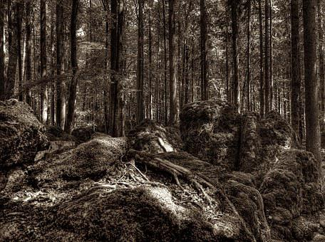 Druid Grove, Forest, Root, Tree Root, National Park