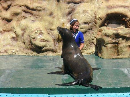 Seal, Zoo Marie, Algarve, Portugal