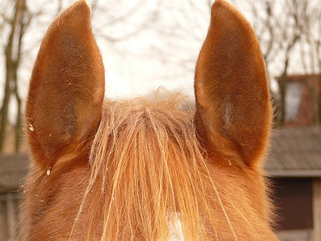 Horse Ears, Ears, Horse, Animal, Fur, Lpony, Creature